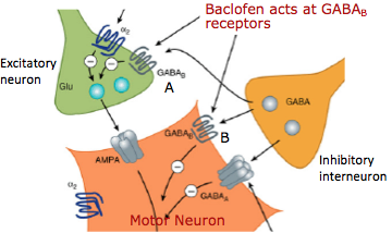 baclofen mechanism of action