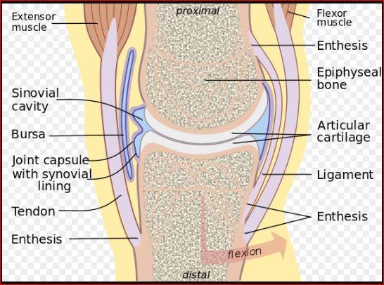 Enthesitis Causes