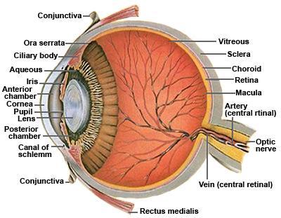 Scleritis picture 1