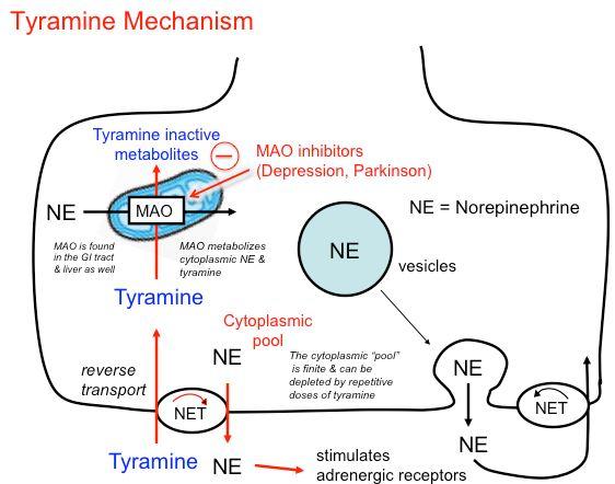Foods High In Amino Acid Tyramine