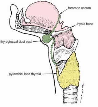 thyroglossal duct cyst anatomy location